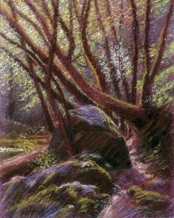 Forest Path, Samuel P. Taylor Park