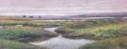 Limantour Marsh